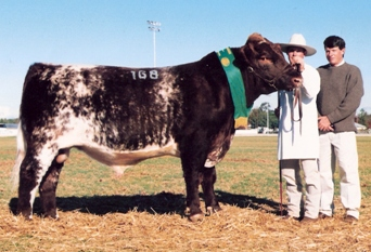 Futurity Victory Reserve Champion Dubbo National Show and Sale