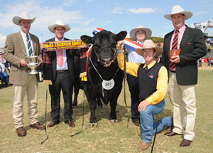 Judge Jason Catts sashing Grand Champion Bull at the EKKA 2011